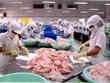 中国或将超美国成为越南查鱼出口最大市场