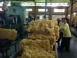 今年前7月柬埔寨橡胶出口增长20%