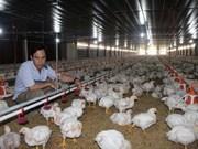 越南养鸡户拟对从美国进口的鸡肉产品提起反倾销诉讼