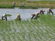 越南全国大米出口量超过280万吨