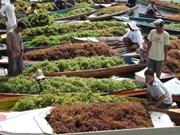 印尼可能将成为世界最大海藻生产国