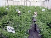 越南努力推进农业结构调整