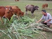 广南省少数民族同胞地区各项减贫政策实施成效显著