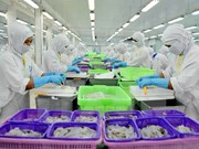 今年下半年越南虾类出口将面临许多困难
