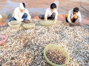 越南双壳类软体动物出口潜力巨大