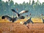 越南鸟栖国家森林公园正式推出绿色旅游线路