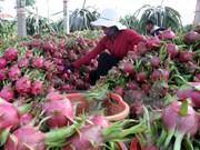 越共中央经济部部长王廷惠:科技成果推广应用促进农业结构调整