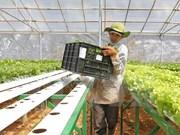 日本企业拟定在越南河南省投资生产有机蔬菜
