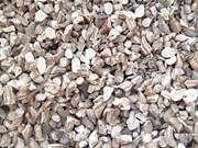 越南财政部正式取消木薯干片出口关税