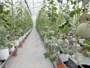 胡志明市与古巴分享发展农业的经验