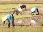 越南与大湄公河次区域各国分享减排水稻生产的经验