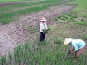 越南必须做好好适应全球气候变化影响的准备