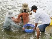 越南虾类产品对英国出口量继续增长