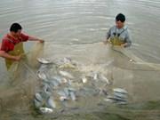 越南罗非鱼出口潜力巨大
