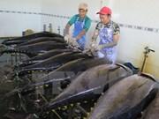越南金枪鱼对加拿大出口增长60%以上