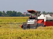 第二届东南亚地区稻米未来论谈在胡志明市举行