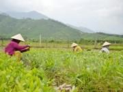 越南农民面临融入世界经济的诸多挑战