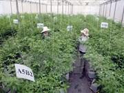 越南农业部门同步展开措施 为融入世界经济做好准备