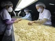 越南腰果行业朝着绿色方向生产产品