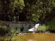 朗森湿地保护区被公认为越南第七处拉姆塞尔湿地