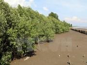 越南计划至2020年将森林覆盖率提升至42%