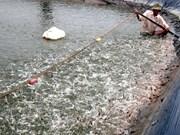2015年金瓯省水产品出口额下降20%