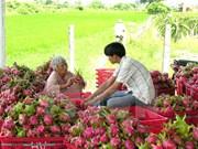 越南蔬果出口创历史新高
