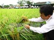 2016年越南水稻种植面积将减少10万公顷