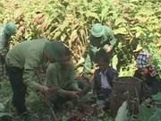广治省337号国防经济团帮困难群众脱贫解困