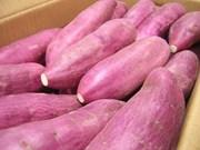 新加坡农粮兽医局:越南红薯并非沾染橙剂可安全食用