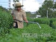 岘港市开始忙碌起来准备种植春节时花