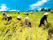 胡志明市农业生产取得可喜成果