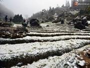 越南北部遭遇罕见低温寒冷天气多地首次下雪
