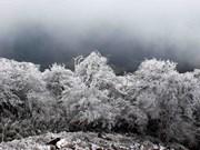 越南北部遭罕见严寒天气  多地首次下雪