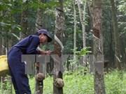 东南亚橡胶主产国决定减少天然橡胶出口量