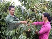 越南西原地区经济呈现积极发展态势