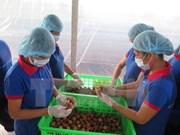 海阳省扩大出口荔枝的生产规模
