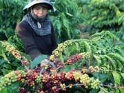 2016年印尼咖啡出口总额有望达10亿美元