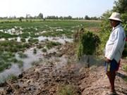 应对气候变化:九龙江三角洲地区携手防治海水入侵