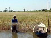 气候干旱与海水入侵给越南多地造成严重影响