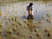越南多地得到援助 克服旱灾及海水入侵带来的后果