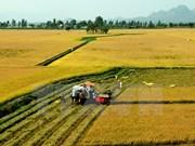 打造农产品品牌并提高其价值