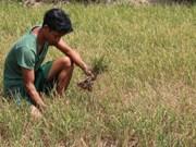 3月份越南南中部和南部旱情和海水入侵现象日趋严峻