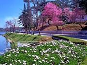 大叻市的鲜花汇聚之地——大叻市花园