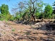 越南九龙江三角洲多地遭旱灾和海水入侵  金瓯省陷入一级干旱