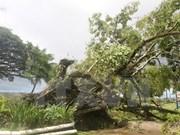 超强台风袭击斐济 越南国家领导人向斐济共和国领导人致慰问电