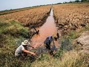 海水入侵日益严重 九龙江平原地区农业将面临严重困境