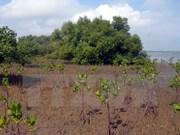 韩国资助190万美元  用于协助越南种植红树林