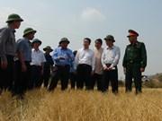 越南政府副总理阮春福视察嘉莱省