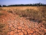 4月份越南中部、西原和南部旱情和海水入侵现象仍将继续